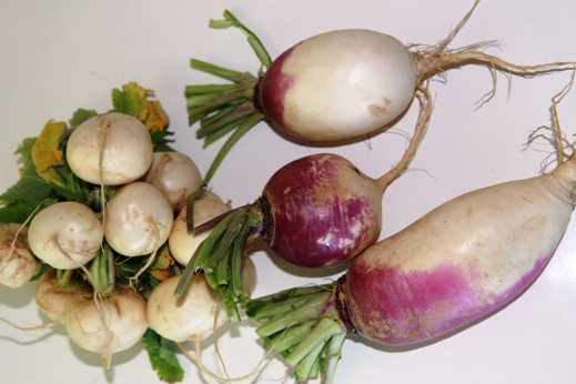 How to Love a Turnip Image